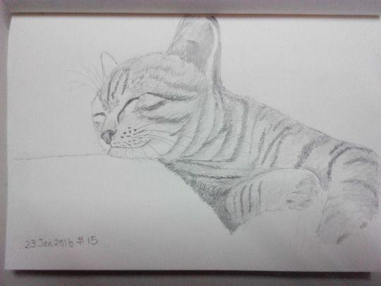 Cat sketching practice #015