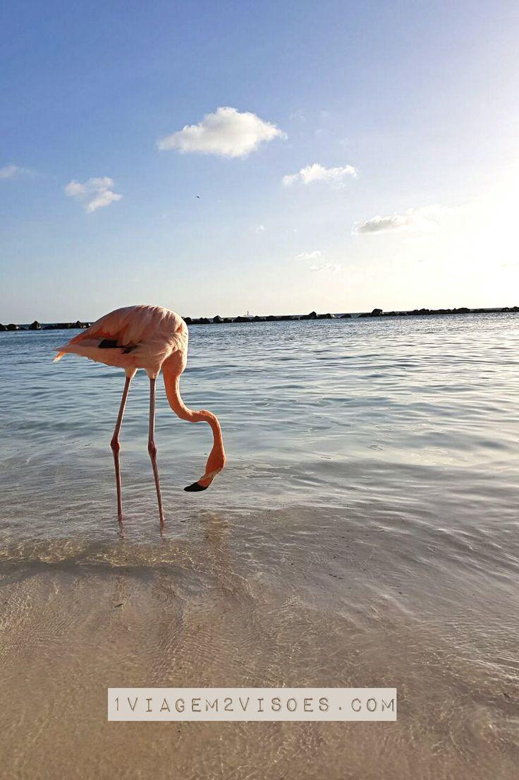 Dicas de Aruba: um compilado de posts sobre como economizar, onde se hospedar além de #PalmBeach, e o que esse país deslumbrante e uma das #ilhas mais lindas e felizes do Caribe fez com a gente! Na foto: O pôr do sol em #flamingobeach, na #RenaissanceIsland em Aruba. Prato cheio pra quem gosta de #natureza, #flamingos cor de rosa, #mar bem #azul e muita #paz e #tranquilidade em um cenário digno de #paraíso. #Aruba #Caribe #Flamingo #Sunset #Pordosol