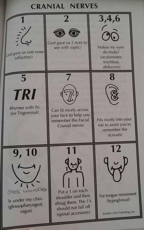 Cranial nerves- nremt paramedic