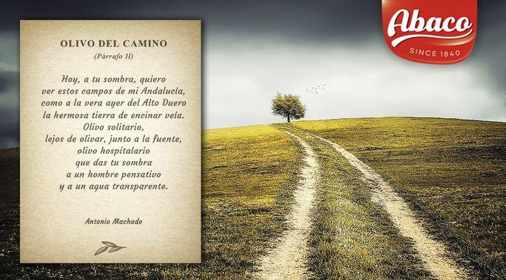 El #poetaespañol #AntonioMachado viajo por los #olivaresespañoles y dedicó muchos versos a su belleza y a los sentimientos que estos transmiten #aceitedeoliva #AOVE #aceitedeespaña