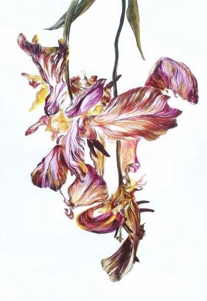 Art by Melissa Halley, Tulip I, 2013,  Bistre & Aquarelle, 28 x 19 cm