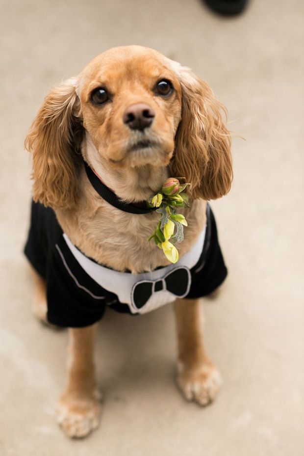15 cute ways to get your dog wedding ready | doggie aisle style!