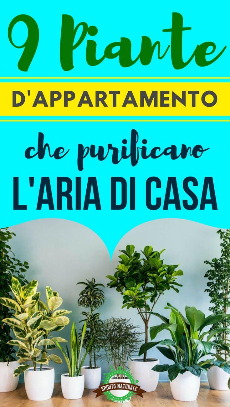 Piante Da Appartamento E Per Esterno Contro Le Zanzare.9 Piante Da Appartamento Che Purificano L Aria E Sono Quasi