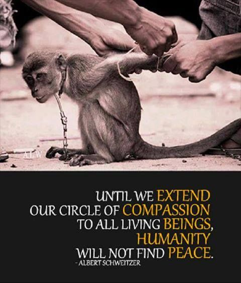 UNTIL WE EXTEND OUR CIRCLE OF HUMANITY TO ALL LIVING BEINGS, HUMANITY WILL NOT FIND PEACE. ++++++++++ ++++++++++ +++++++++ ++++++++++