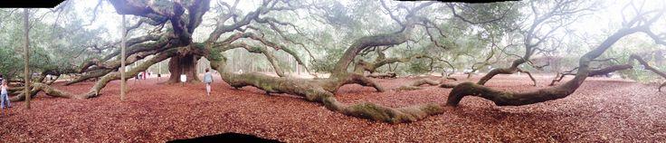 Angel Oak Tree, SC