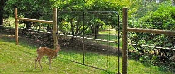 Deer Fence Idea Gives Some Pointers About What They Did