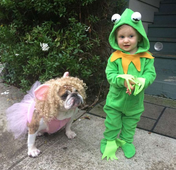 """Kermit and Miss Piggy: Mari writes: """"Here are our daughters, Loretta the 6 year old English Bulldog, and Marlowe, her 1 and a half year old younger sister, as Miss Piggy and Kermit."""" Photo: Super Crafty Costume Contest"""
