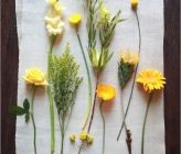 This may come in handy. DIY flower guide.