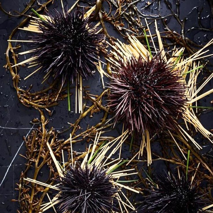 #Uni #Pasta #cookingwithzac #zacposen photo by @awilliamsphoto styling by @victoriagranof recipe in book available now! #dinner #foodstagram #zacposen #foodporn #seaurchin