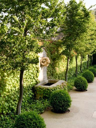 113 best HEDGES AND WALLS images on Pinterest Landscaping ideas