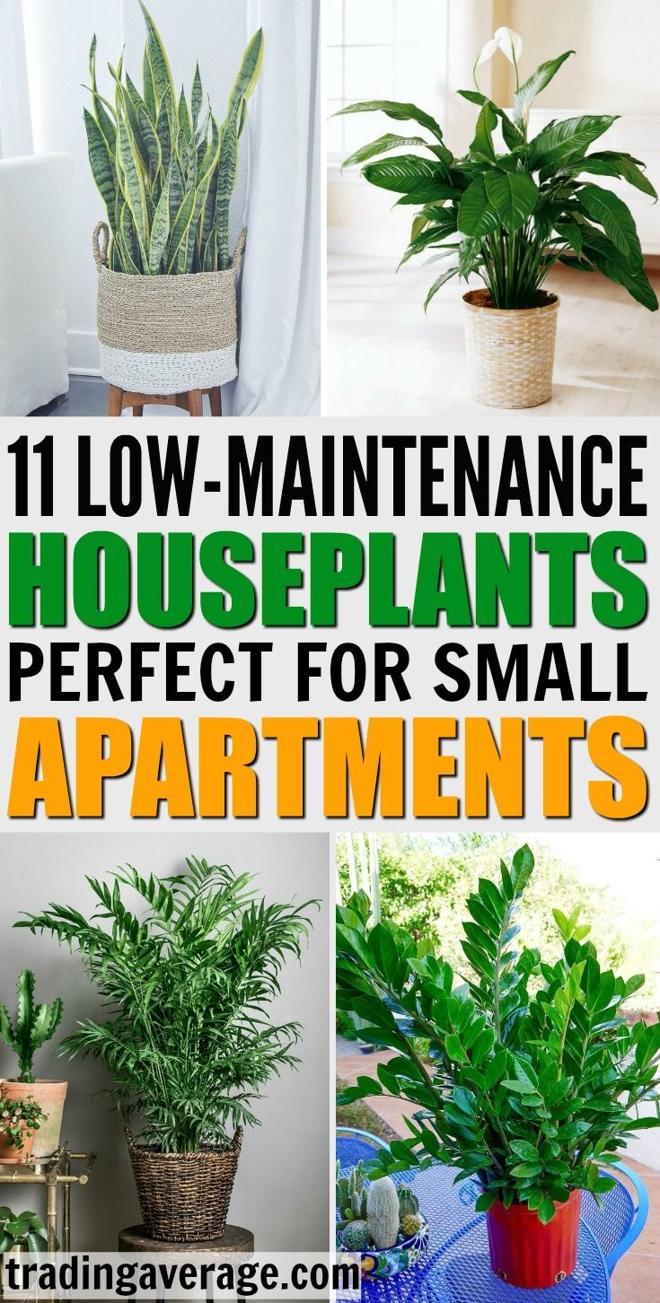 11 Houseplants That Dont Need A Lot Of Sunlight To Grow Do You Need Houseplants For Your Apartment Her Indoor Plants Low Light Apartment Plants Inside Plants