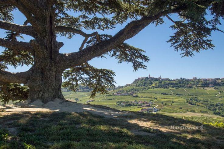 Il cedro del Libano, La Morra | Max510's Blog Giro in moto nelle Langhe e visita al famoso #CedrodelLibano di #LaMorra