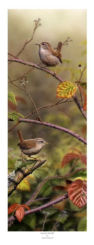 Autumn's Paint Brush- My neighbor has a gourd bird house hanging from her oak tree. Wrens are nesting there and sometimes they visit me.- LadyLuxury