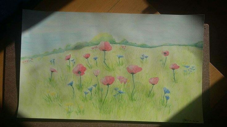 Meadow. Poppies. Cornflower. Watercolour crayons.
