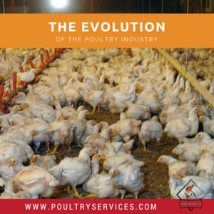 The Evolution Of The Poultry Industry - http://www.poultryservices.com/blog/the-evolution-of-the-poultry-industry