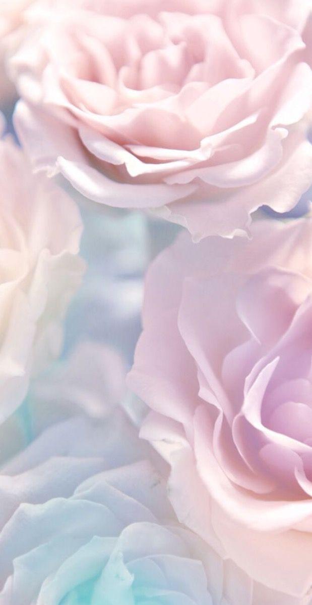 Pinky Blue Rose iPhone Hintergrundbild