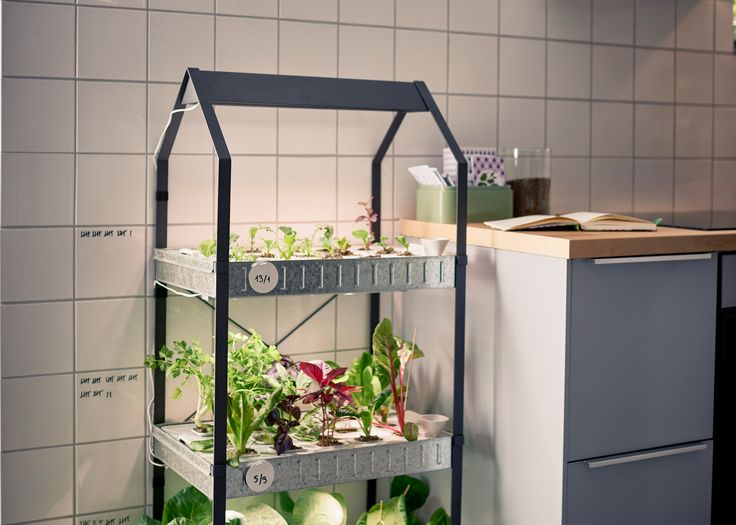 Best 10 hydroponics kits ideas on pinterest indoor for Indoor gardening kit