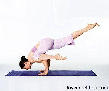 die besten yogaÜbungen für anfänger und fortgeschrittene