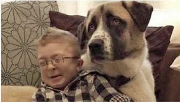 γεντικης λεωνιδας: ΑΠΙΣΤΕΥΤΟ ΒΙΝΤΕΟ: Δείτε πώς ο σκύλος βοηθάει παιδά...http://dimitris1mpaxalo.blogspot.gr/