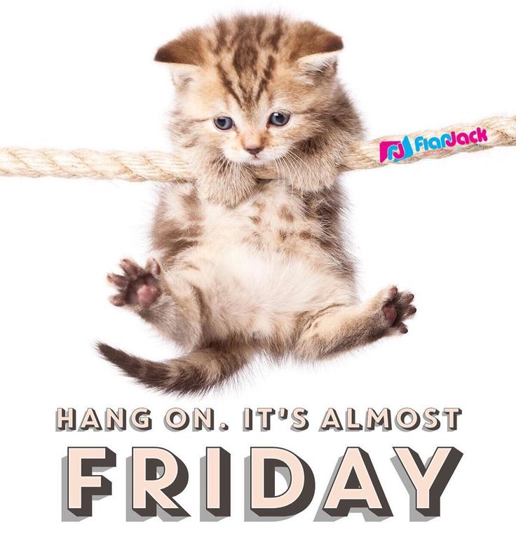 #meow #almostfriday
