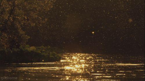 6 datos interesantes sobre las luciérnagas que no debes perderte - Batanga
