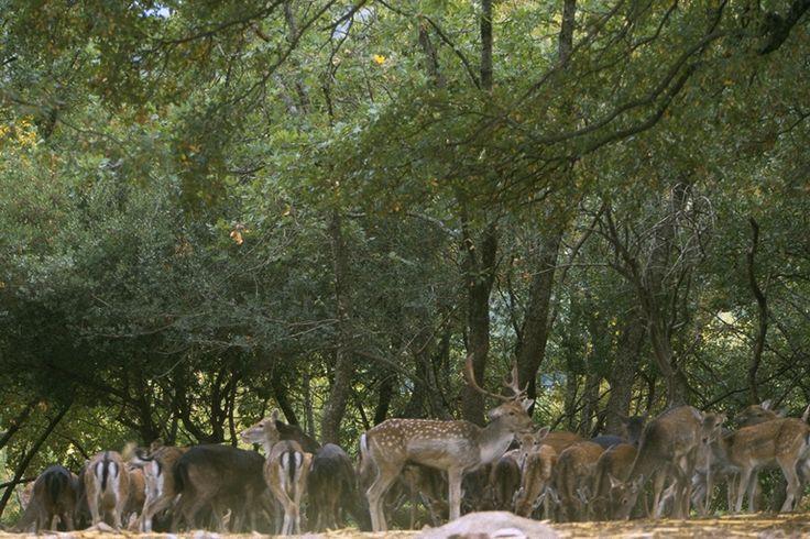 Περιβαλλοντικό Πάρκο «Μπουραζάνι» :: Δήμος Κόνιτσας ::