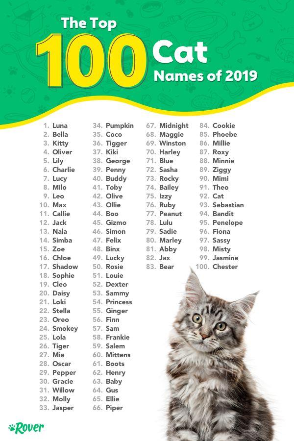 Unique Boy Cat Names