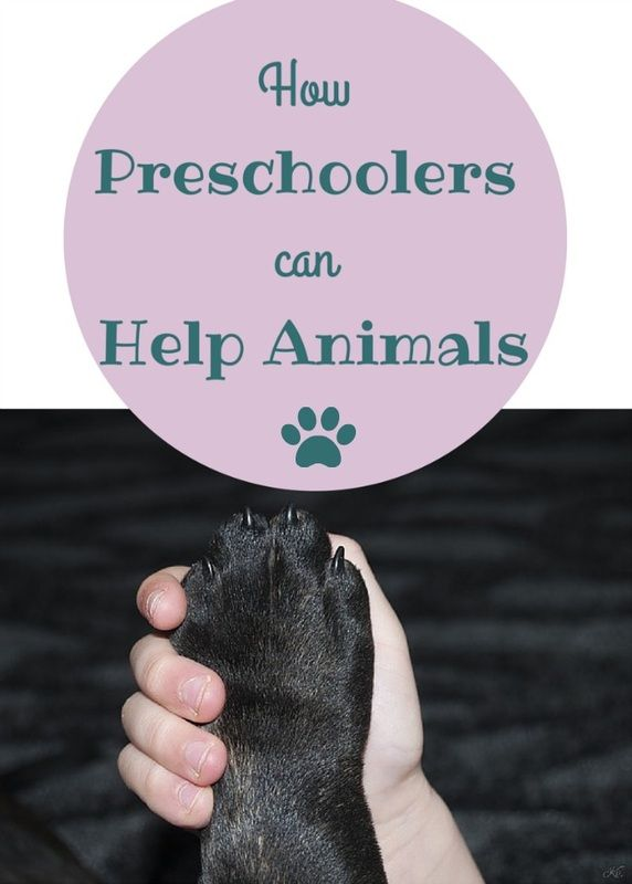 Even young kids can help animals, both their own and those in shelters!