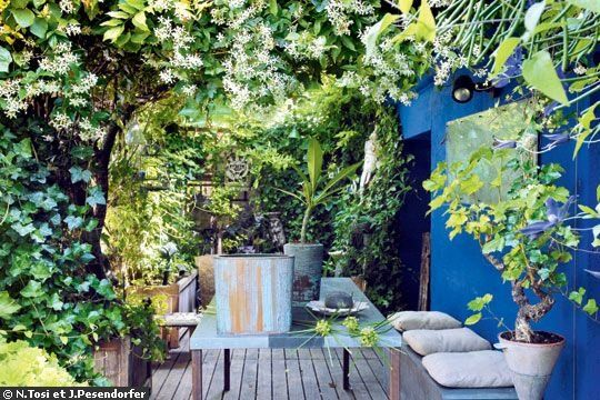 Little jungle in the patio   More photos http://petitlien.fr/terrassevegetalisee