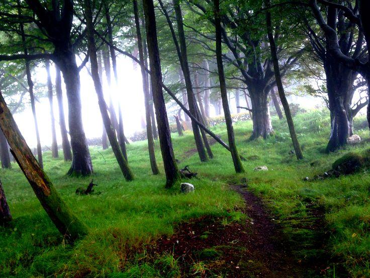 Wicklow Way - Day 3, Glendalough to Lough Dan