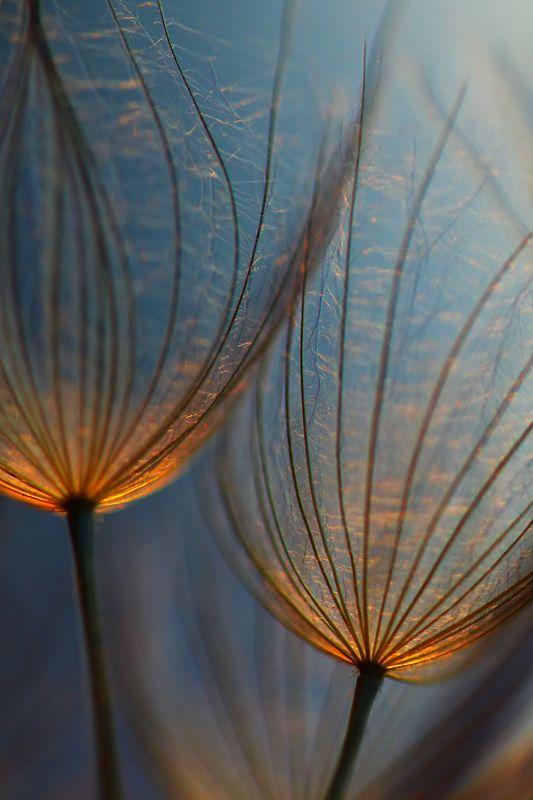 coffeenuts: colorel11:© Joanna Antosik