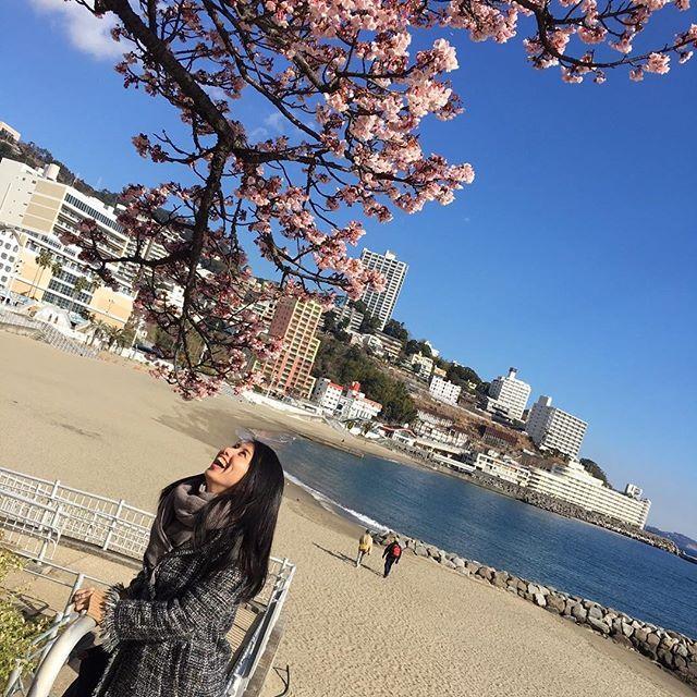 "【shihoshingu】さんのInstagramをピンしています。 《Japanese ""SAKURA""🌸 旅先で少し早めの桜。 抜けるような空、暖かい潮風、旬の料理。 どこを切り取っても心から楽しくて笑い続けた🤣  人生着飾る必要はなく、ウソや薄っぺらさはバレる、としみじみ感じた時間でした🌊 あゝ笑った笑った。 #SAKURA#spring#sea#seaside#ocean#japantrip#japan#l4l#like4like#itsme#私たちの新幹線#いろんなことまた覚えた#旅先#旅#海#桜#次はどこ行こう#弾丸ツアー#出発は昨日の夜#アホや#早々と解散》"