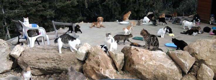 The cats of Neofytos Monastery in Tala, Cyprus.