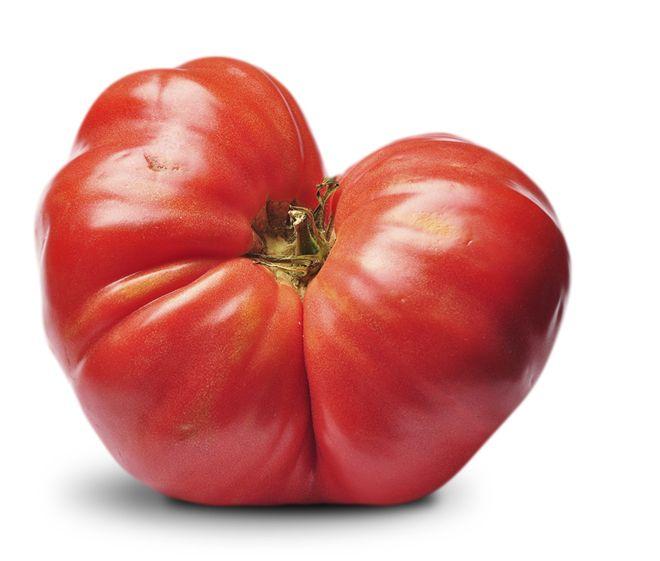 A la hora de ir al mercado es el más deseado. Siempre hay ganas de tomate, pero pese a la amplia oferta existente en grandes superficies y fruterías, dar con un tomate que sepa a t