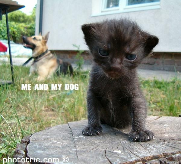 Me and My Dog #cats #humor