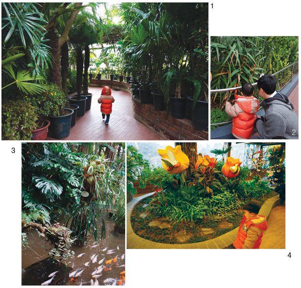 1·2 어린이대공원 식물원은 따뜻한 실내에서 자연을 체험하기 좋은 곳이다. 3 연못과 함께 다양한 수생식물도 만날 수 있다. 4 죽은 향나무를 이용해 꽃과 나비들의 안식처로 다시 태어난 꽃과 나비존은 사진 찍기에 좋다.
