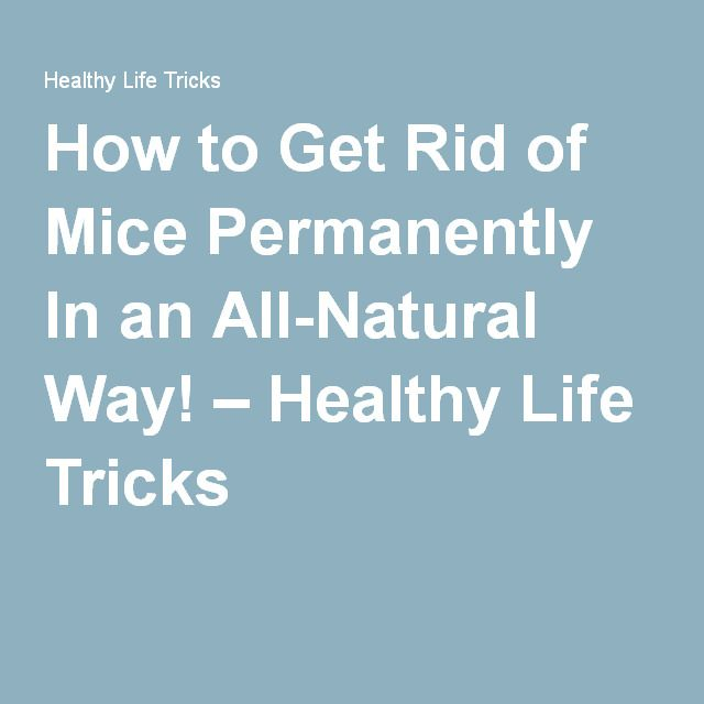 How to Get Rid of Mice Permanently In an All-Natural Way! – Healthy Life Tricks