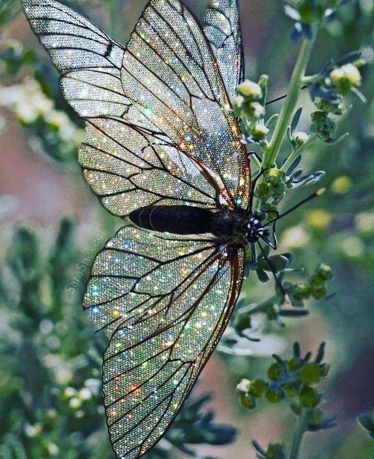 Fairycore, also known as fairywave or faecore, is an aesthetic surrounding the theme of nature, soft pastels, butterflies, magic, flowers, soft animals like. Pin by Danielle Aubuchon on Animals | Butterfly, Beautiful ...
