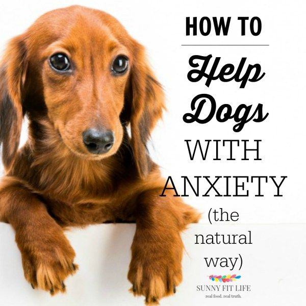 How to Help Dogs With Anxiety the Natural Way - Boost Energy Naturally