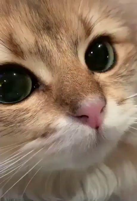 O que uma gatinha linda #kitty #beautiful #cat #closeup   – Katzen