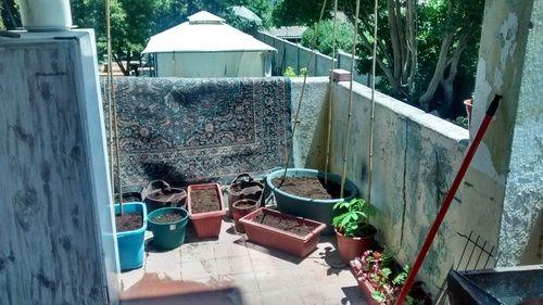 C.U.C. - ¿Importa donde y cómo ordeno las plantas en mi huerta?