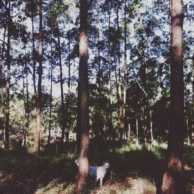 dog at kintamani woods