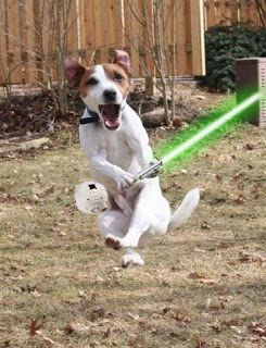 1000+ images about Animals with lightsabers on Pinterest