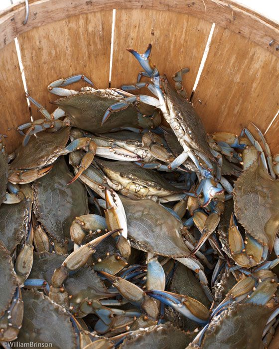 Maryland blue crabs: Girl, Cottage, Chesapeake Bay, Summer Beach1