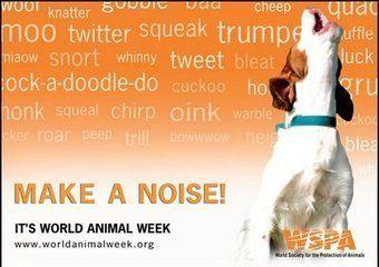 Dia mundial do Animal