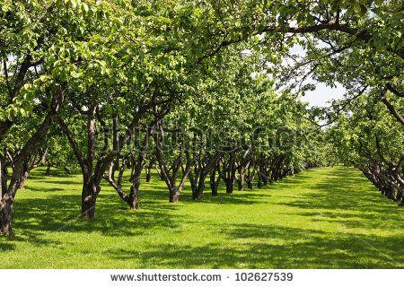 57 best apple garden images on Pinterest | Apple garden, Apple and ...