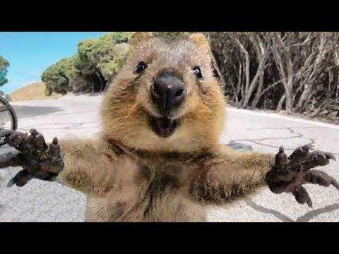 (20) Animals Hugging Humans - Animal Hugs People Videos - Animal Hugs Human Compilation - YouTube