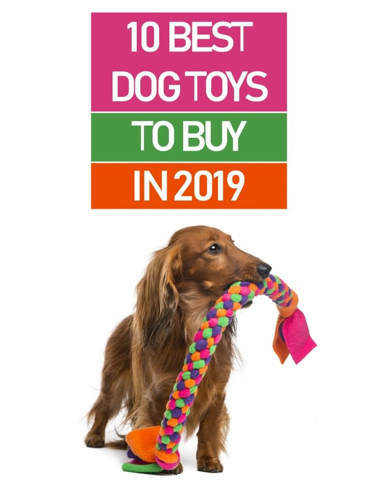 Here S Our List Of The 10 Best Dog Toys To Buy In 2019 It Covers