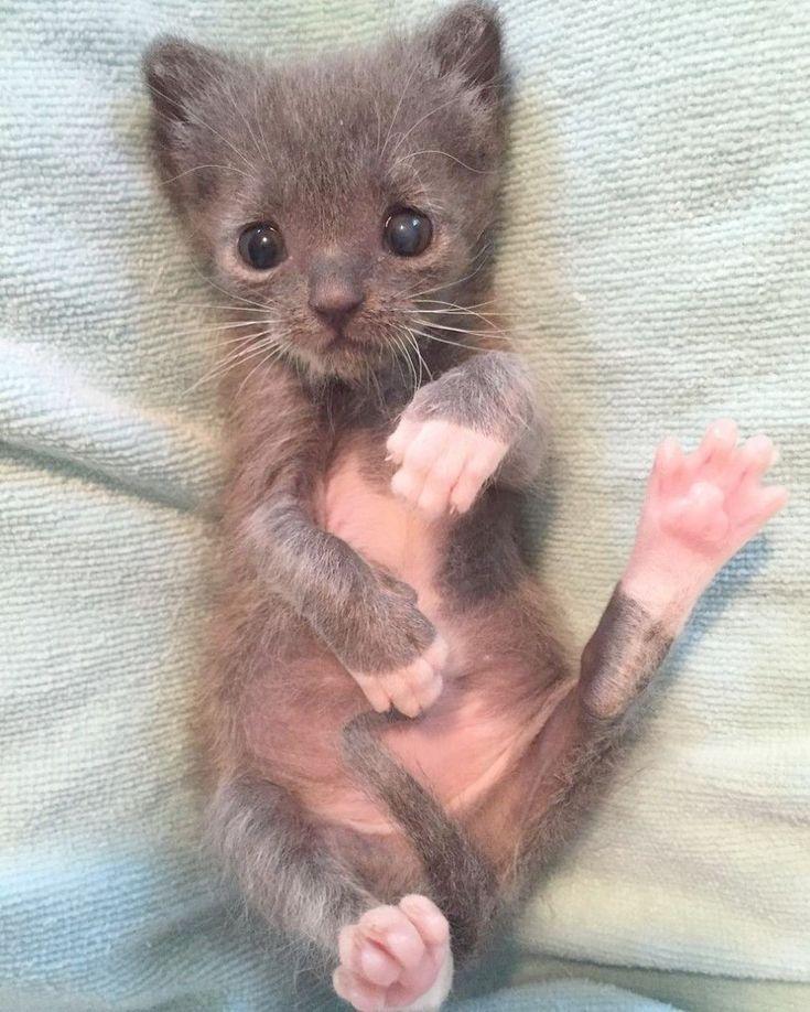 Fantastic... Kittens For Sale pinterest Kittens cutest