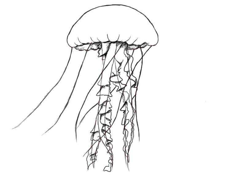 cd58e35d35dea6be5f9ada07380b5252jpg 736609 pixels fish sketchceramics ideaswind chimesjellyfishfish drawingstattoo